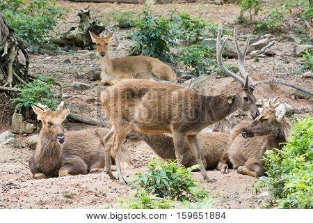 Red deer Red deer Red deer Red deer
