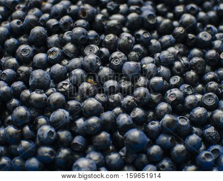 Bilberry in close-up, photo with selective focus