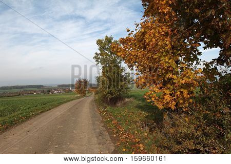 Autumn landscape / Landscape with tree and road