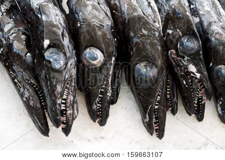 Black scabbardfish - Aphanopus carbo - in the Fish Market Funchal, Portugal