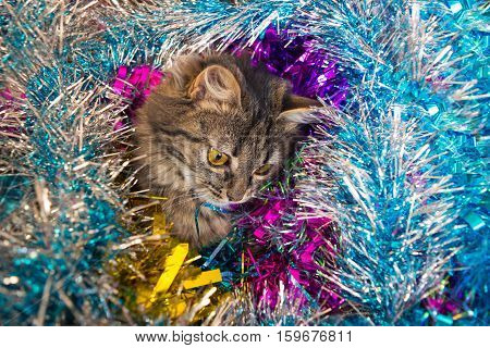 Cat Looking Down In The Tinsel.