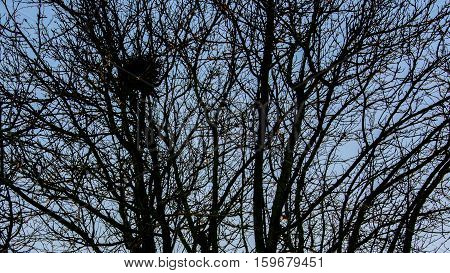 Bird's nest in tree with dense branches