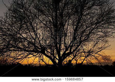 Dense branches in front of warm sunset