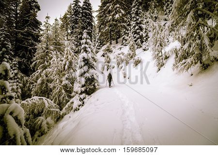 Girl Trekking With Snowshoes In The Wood