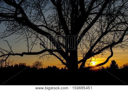 Section of single tree in front of warm orange sunset
