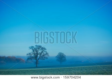 Lonely tree on a meadow on a misty autumn day