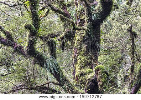 Green moss on tree at Milford Sound New Zealand