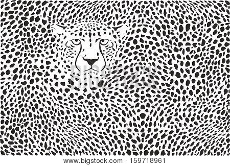 vector illustration background cheetah skins and heads