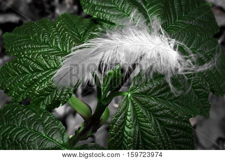 a macro picture of a feather on a leaf
