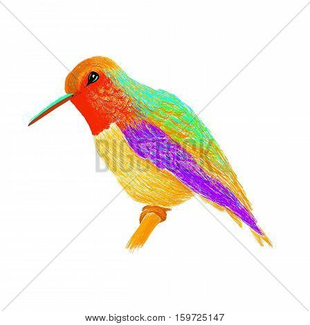 Hummingbird with colourful glossy plumage. Modern pop art style. Colorful bird, white background. Vector illustration of colibri for greeting card, nvitation, print, web project. Bright and vivid colors.