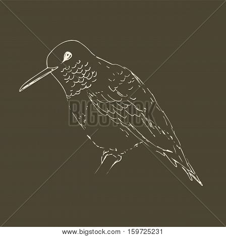 Hummingbird isolated on a dark beige background. Bird sketch. Vintage or retro style. Vector drawing of colibri for greeting cards, invitations, prints, web projects. Hand drawn illustration.