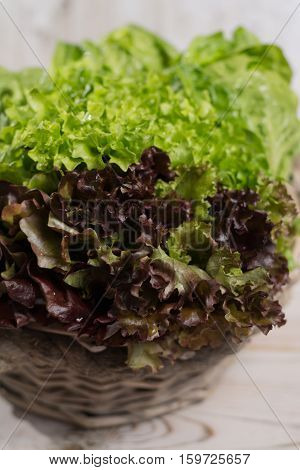 Variety of green and red roma fresh lettuce salad leaves - healthy low calorie food