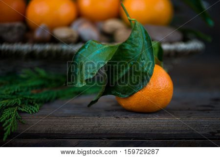 Nuts Fresh Clementines or Tangerines in the Basket and Xmas Tree Branches on Brown Wooden Background