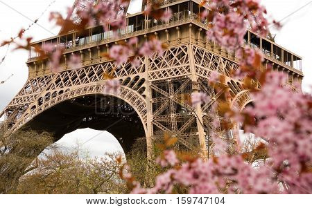 Spring In Paris. Bloomy Cherry Tree And The Eiffel Tower. Focus On The Eiffel Tower