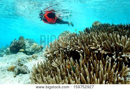 Staghorn coral reef in clear tropical waters in front of old Asian woman diver indo-pacific ocean