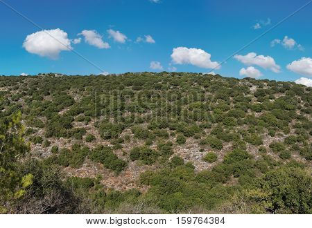 Mediterranean landscape of green hill covered with bushes