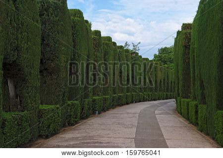 Curved pathway in the famous gardens of Alhambra