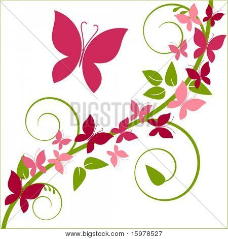 butterflies and vine