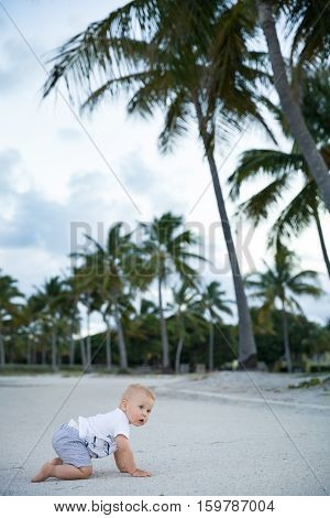 Adorable toddlerboy crawling in a tropic park. Cute little boy learning to walk outside on the sandy ocean beach. Small child near palms.