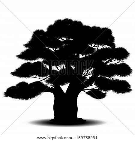 silhouette cedar tree with green needles on a white background