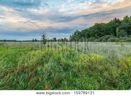 Field and edge of the forest at evening, early autumn