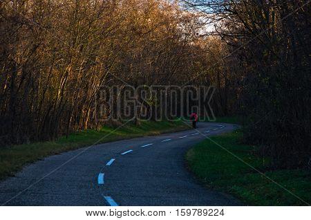 Hiker walking on a forest road at autumn sunset, Deliblatska pescara, Serbia