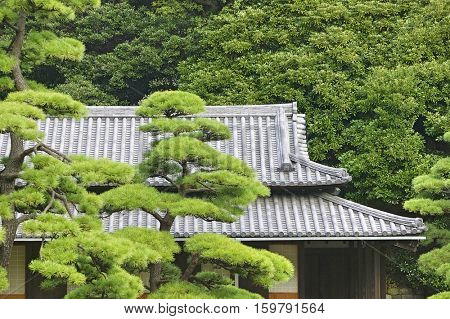 Japan, Tokyo, Tokyo Imperial Palace, Rooftop of Otemon (East Gate) seen through trees