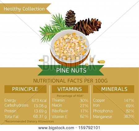 Pine nuts health benefits. Vector illustration with useful nutritional facts. Essential vitamins and minerals in healthy food. Medical, healthcare and dietory concept.