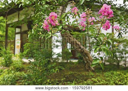 Japan, Himeji, Himeji Koko-en Gardens
