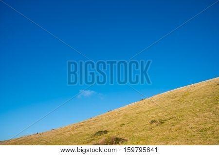 Yellow grass field with blue sky background