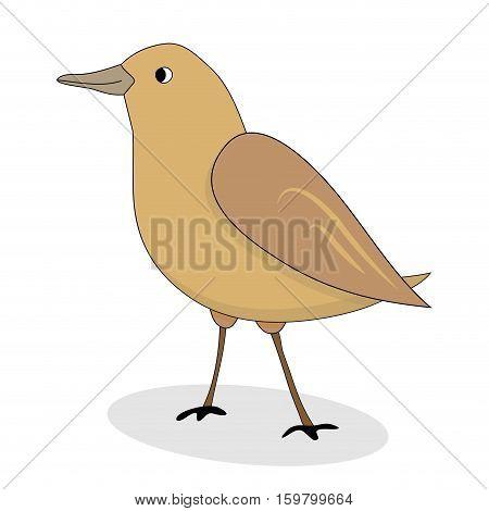 Cartoon nightingale bird vector. Luscinia luscinia nightingale illustration