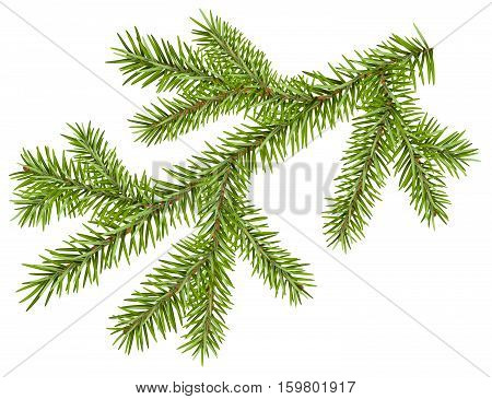 Green fir branch with short needles. Isolated on white vector illustration