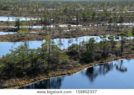 Swamp scenery at springtime - look from above.