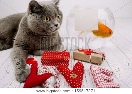 Word Love Made Of Red Cloth Letters Lies Before Grey British Shorthair Cat And Aquarium With Empty C
