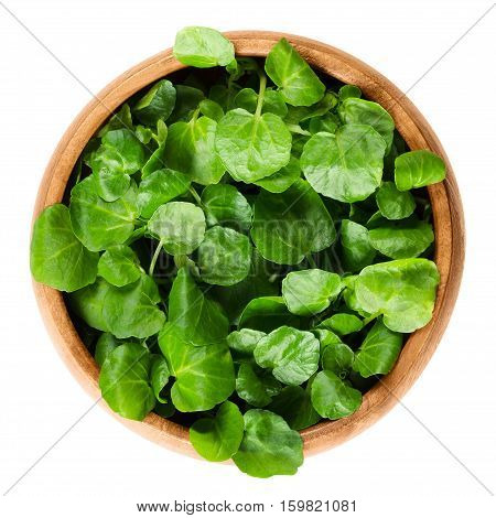 Watercress in wooden bowl. Nasturtium officinale, an edible green aquatic plant and leaf vegetable, used in salads or in soups. Isolated macro food photo close up from above on white background.
