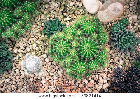 Group of Cactus Various Kind Nature Houseplant Fresh Concept in top view vintage tone.