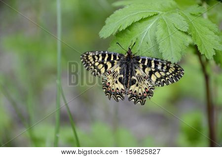 Horizontal photo of macro colorful butterfly on the leaf
