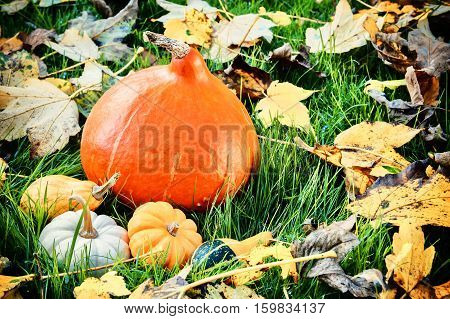 Autumn still-life with pumpkins and fall leaves in sunlit garden. Fall background