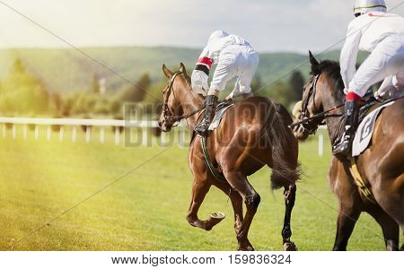 Two horses and jockeys competing in the race. the sunlit path and two jockeys on racing horses. Racing Circuit competition.