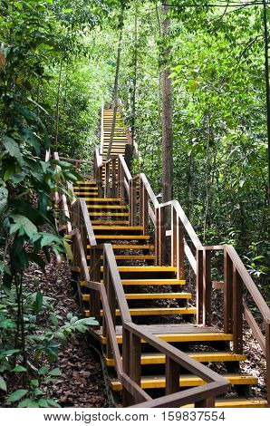 Singapore nature reserve, man-made wooden bridge in a forest