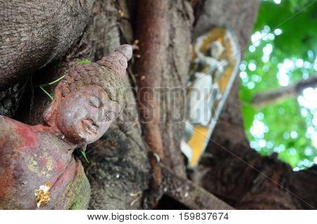 Buddha statue and root tree in the temple