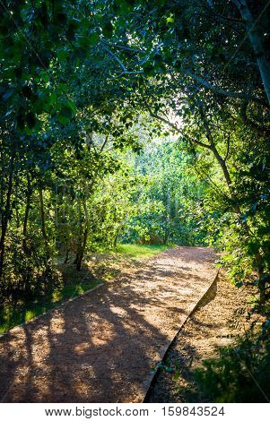 sunlight in forest shining on a small path