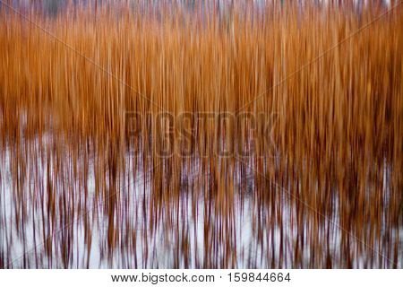 dry reed in the winter field in motion blur