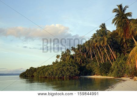 Palm Trees and Beach at Raja Ampat Dive Lodge on Mansuar Island. Raja Ampat Indonesia