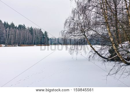 winter field near the forest in the gloomy weather