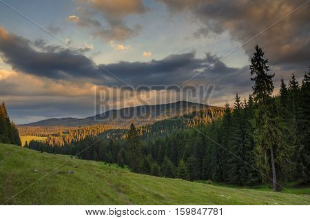 Lan dscape with forests. Nature in Europe. Sunset scenic. Green meadows. Apuseni Mountains in Romania. Natural background.
