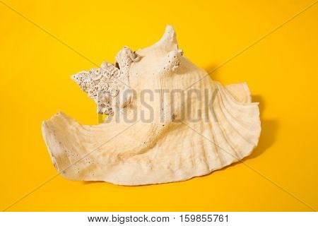 Large shell on a yellow background. Conceptual photography