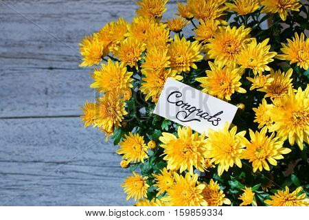 bouquet of yellow chrysanthemum with a card with handwritten text congrats on blurred wooden background