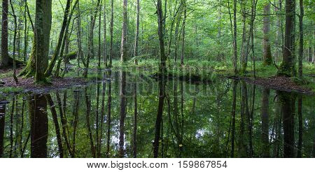 Summertime Linden-oak-hornbeam Stand With Water