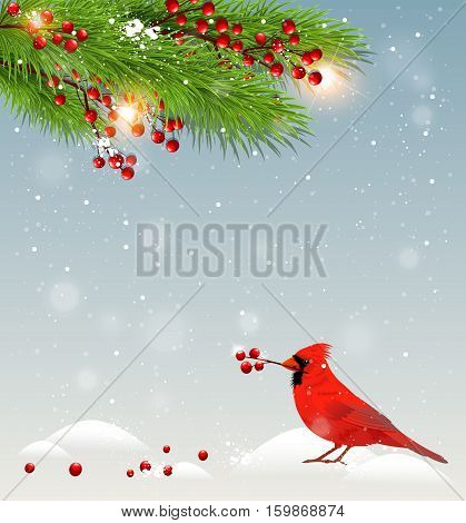 Winter landscape with cardinal bird in snow and green fir branches